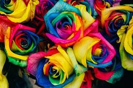 roses-828945__180